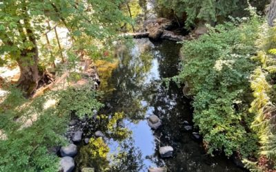 """Call for fixed media — Duet with Johnson Creek (part of upcoming """"Crossing Paths"""" event)"""